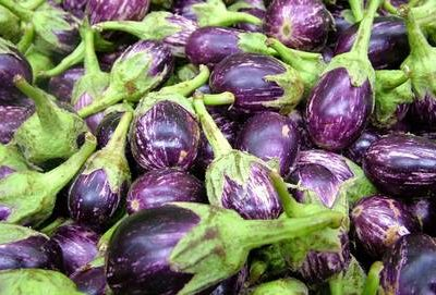 genetically-modified-bt-brinjal-aubergine-illegally-growing-in-india-who-is-really-pulling-the-strings-asia-pacific-research