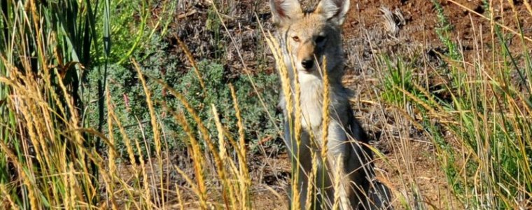 analysis:-public-overwhelmingly-wants-epa-ban-on-wildlife-killing-'cyanide-bombs'-–-global-research