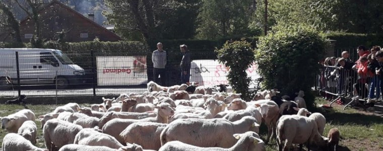 'education-is-only-numbers':-french-alps-school-enrolls-sheep-as-pupils-to-save-class-(photos)