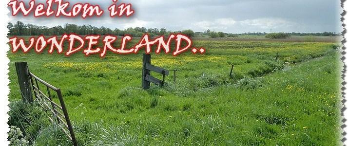wat-'wonderland'-was,-is-en-kan-worden.!