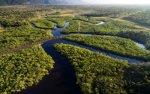 details-zum-amazonas-regenwald