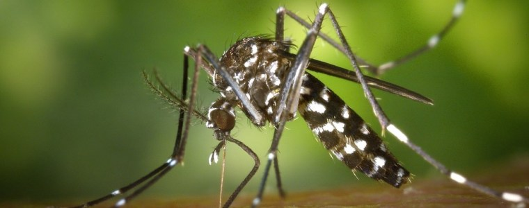 genetically-modified-mosquito-apocalypse-plan-backfires-spectacularly-in-brazil