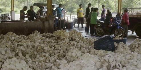 autoreifen:-erbarmliche-arbeitsbedingungen-auf-gummiplantagen