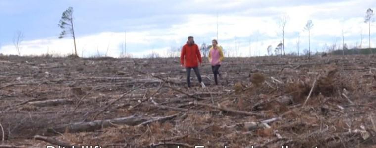 de-schandalige-houtkap-voor-'groene-biomassa'…!!?