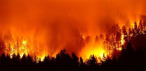 von-greyerz:-the-global-forest-fire-is-here