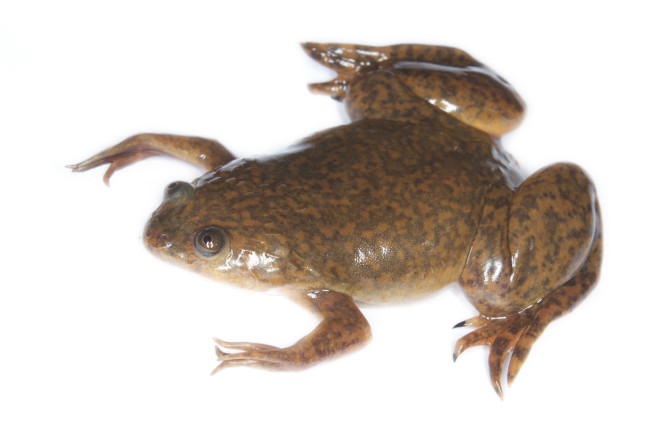 part-robot,-part-frog:-xenobots-are-the-first-robots-made-from-living-cells