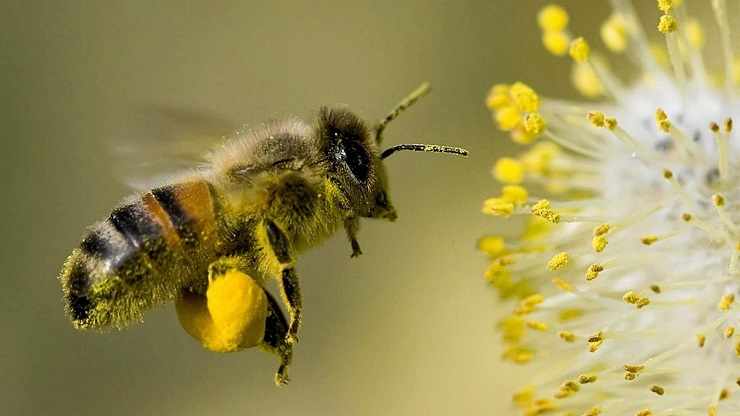 german-government-uses-lockdown-to-sneak-deadly-pesticide-|-new-eastern-outlook