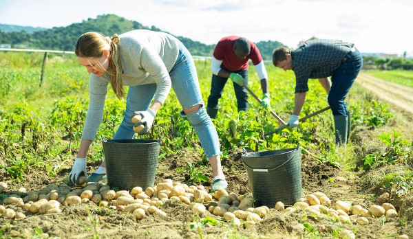 een-voedselcooperatie-opzetten:-samen-overvloed-scheppen-en-verdelen-–-de-lange-mars-plus