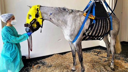 a-horse-suffering-from-neurological-symptoms-caused-by-ehv-1-robert-gorter,-md,-phd