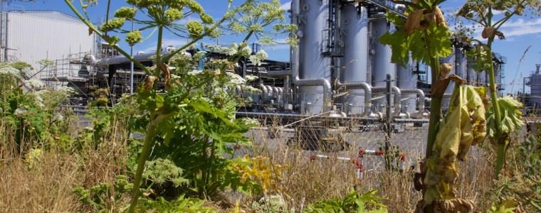 groene-energie:-gasrotonde-natuur-in-alkmaarder-emiraten-–-interessante-tijden