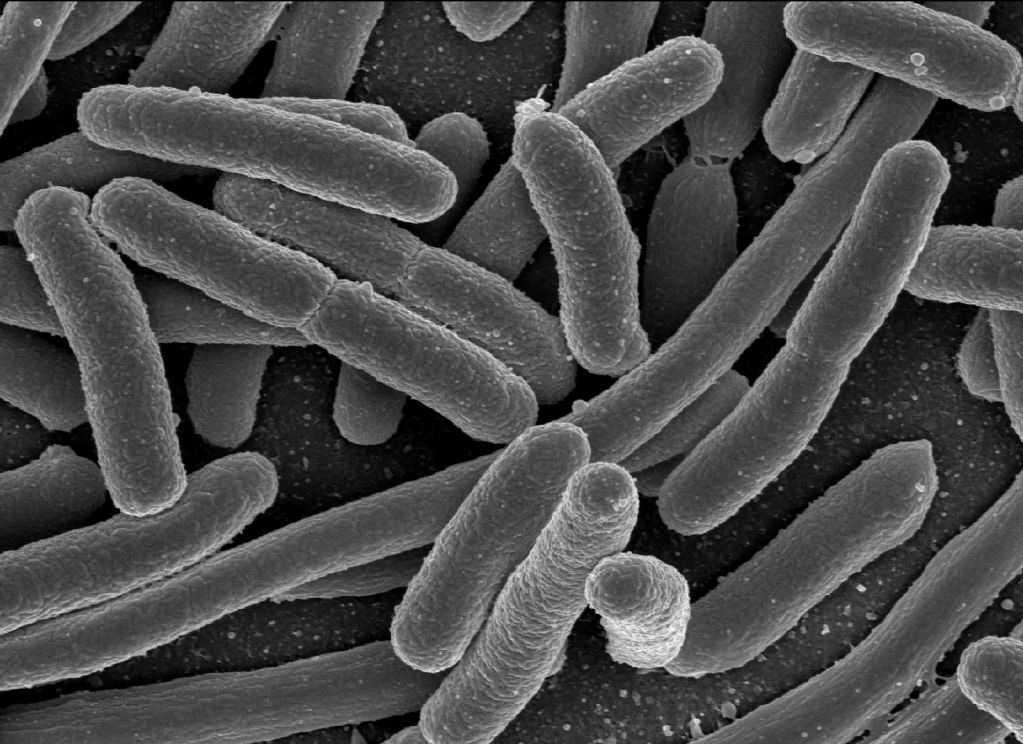 dr-jarozlav-belsky:-sterke-opeenhoping-van-e.-coli-bacterien-op-implantaten-na-vaccinatie-–-frontnieuws