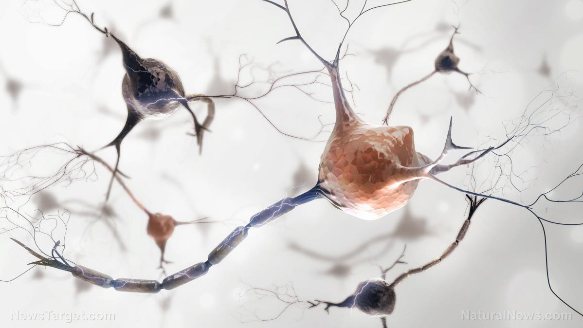 """graphene-based-""""neuromodulation""""-technology-is-real:-press-release-from-inbrain-neuroelectronics-describes-brain-controlling-biocircuits-using-ai-powered-graphene"""
