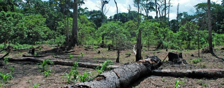 wereld-natuur-fonds-klaagt-britse-banken-aan-voor-financiering-ontbossing