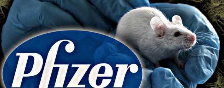 pfizer-wordt-beschuldigd-van-experimenten-op-weesbaby's-om-hun-covid-19-vaccin-te-testen