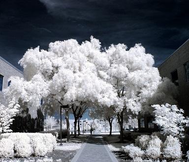 infrarood-en-albedo