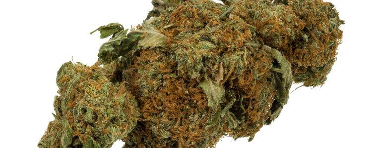 de-geplande-legalisering-van-cannabis-in-duitsland-is-niet-wetenschappelijk-verantwoord