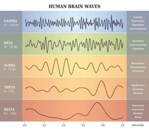 heeft-de-elektrogevoelige-een-dominante-hersenhelft?