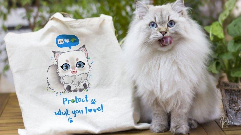 10 sposobów na EKOlogiczne życie z kotem