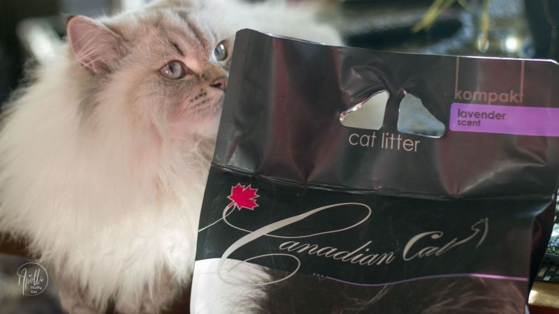 Canadian Cat bentonite cat litter – tests and review