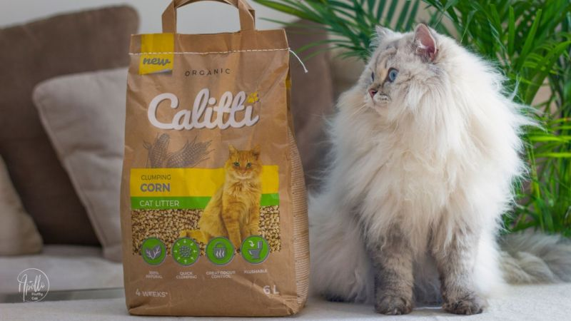 Calitti Corn cat litter – tests and review