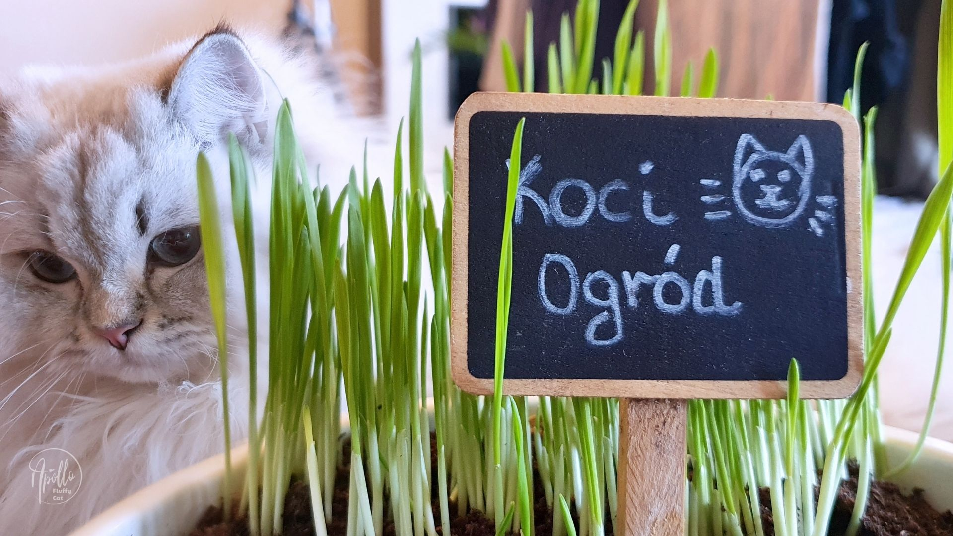 Grow your own herbs and grass for cats