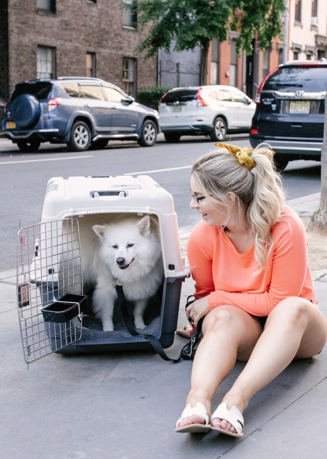 Dog in crate in New York City