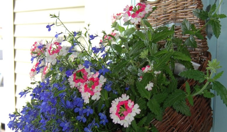 Container Gardening Planter Ideas: 10 Fun Ideas for Flowers!
