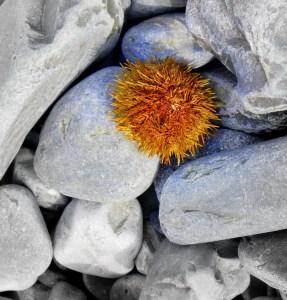 Brigus - beach rocks