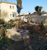 Χωρίς την έγκριση της Αρχαιολογίας κλαδεύτηκαν τα αιωνόβια δέντρα στο Επισκοπείο των Αγίων Δέκα