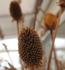 Seedheads 3
