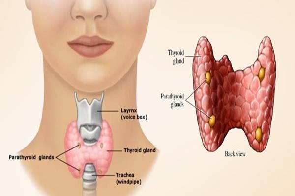 penyakit tiroid