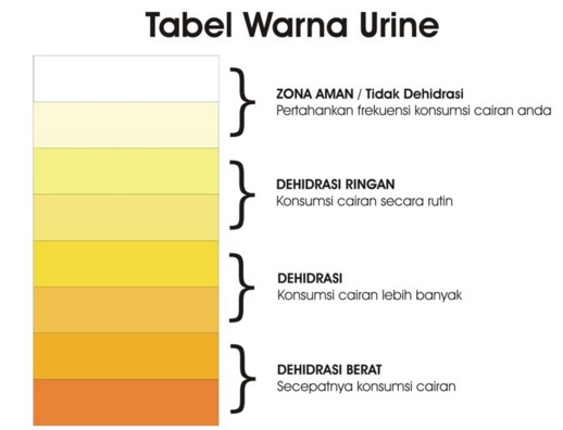 warna urin normal dan dehidrasi