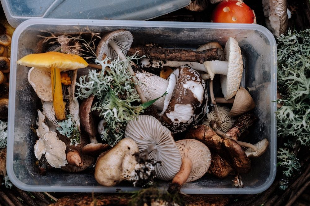 A container of wild, foraged musrooms