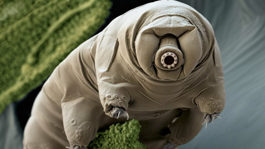 Tardigrade swimming in water in Japan