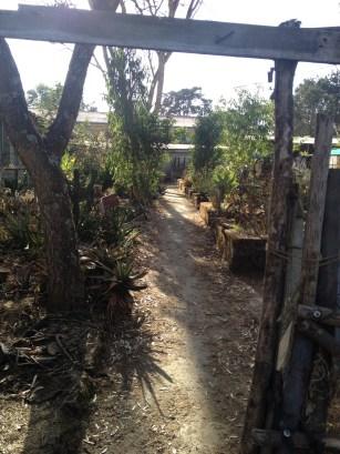Specimen Garden at the University of Addis Ababa