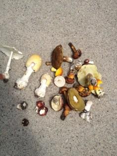 Wild Mushroom Collection