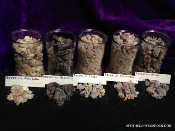 A Visual comparison of Boswellia Species-Frankincense