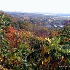 Fall Vista-Hamilton Mushroom Hunt 2013