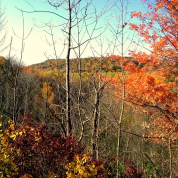 Wild Mushroom Hunt Gorgeous Fall colours Dundas escarpment