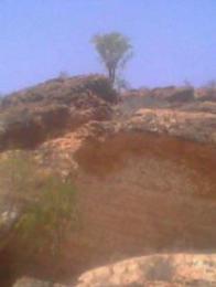 Boswellia Frereana Somaliland