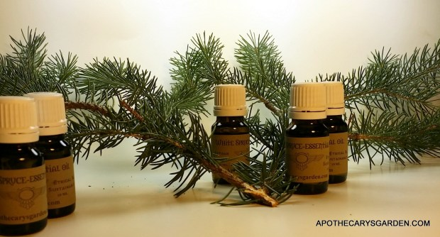 Artisan distilled essential oil of Eastern White Spruce
