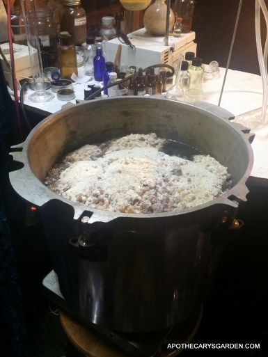 Frankincense Frereana Hydro Distillation. Grinding the oleo-resin.