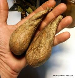 Grade #1 Beaver Castoreum-Castor sacs-Canada
