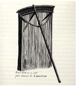 1700-1702 woodcut- A Ladanisterion. The tool still used today by villagers in rural Crete to hand-harvest wild Labdanum, Cistus Creticus, for perfume, incense and medicine.