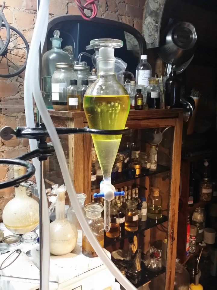 Frankincense Frereana essential oil distillation in separatory funnel.