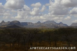 Thousands of square miles of mixed Commiphora/Acacia bushland where many varieties of Myrrh are found.