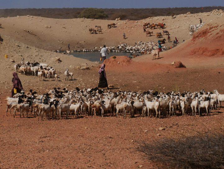 Herders Somali Region Ethiopia FairtradeFrankincense.com
