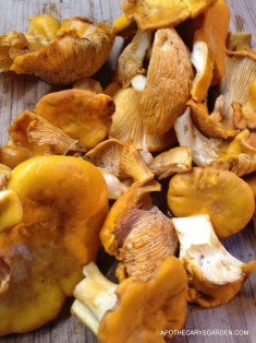 Chantrelles Princess Point Hamilton 2013
