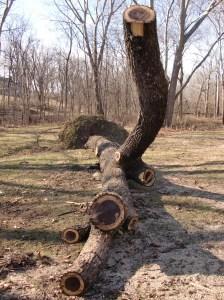 Tree skeleton.