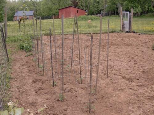 Tomato-land (with basil).